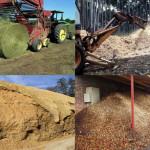 biomassza-nagy_47620100615102640844
