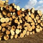 biomassza_cl
