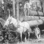 logging_arkansas