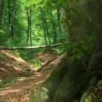 Erdő-út