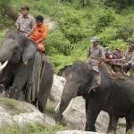 elefant_erdotuz_1