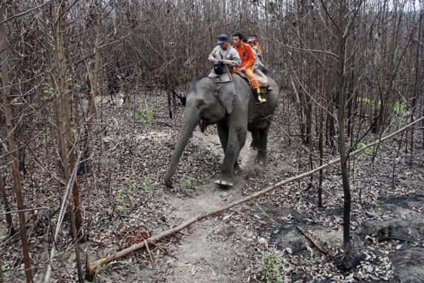 elefant_erdotuz_4