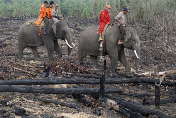elefant_erdotuz_5