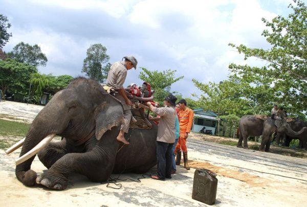 elefant_erdotuz_6