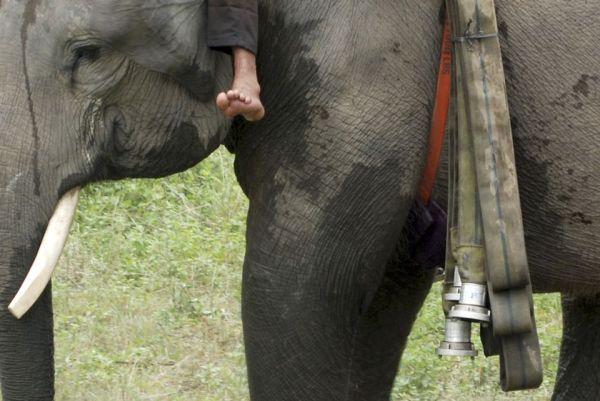 elefant_erdotuz_7