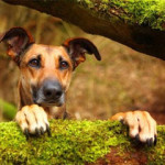 kutya_erdo