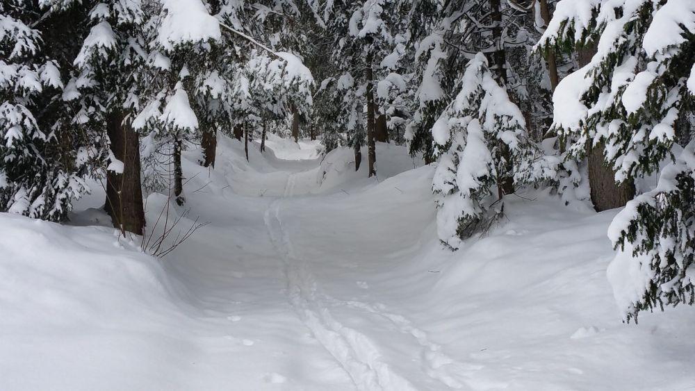 havas_fenyo