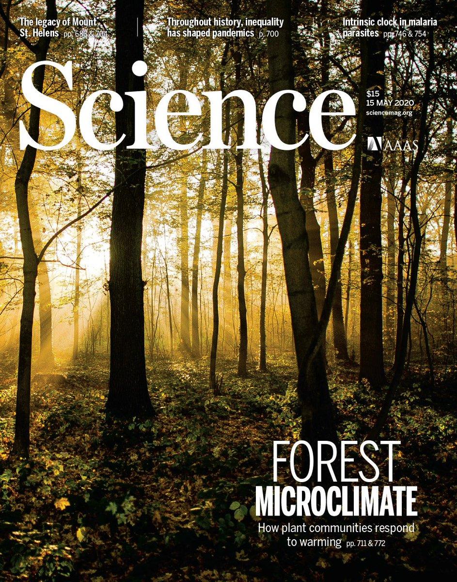 science_erdei_mikroklima