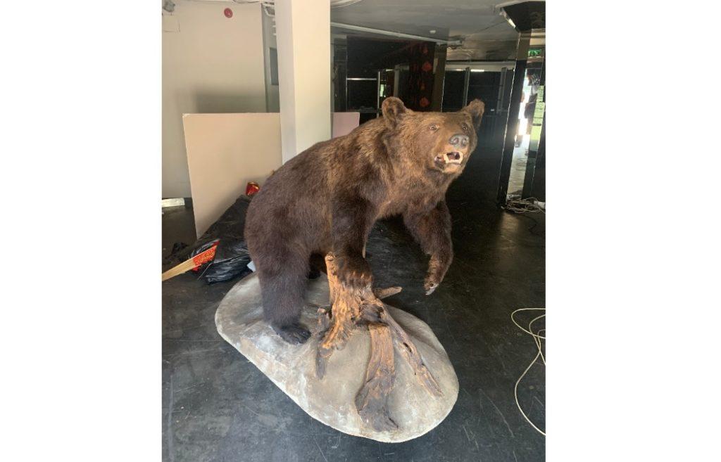 medve-preparátum-02