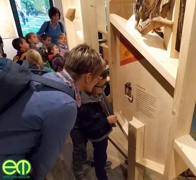 kohalmy_vadaszati_muzeum_21