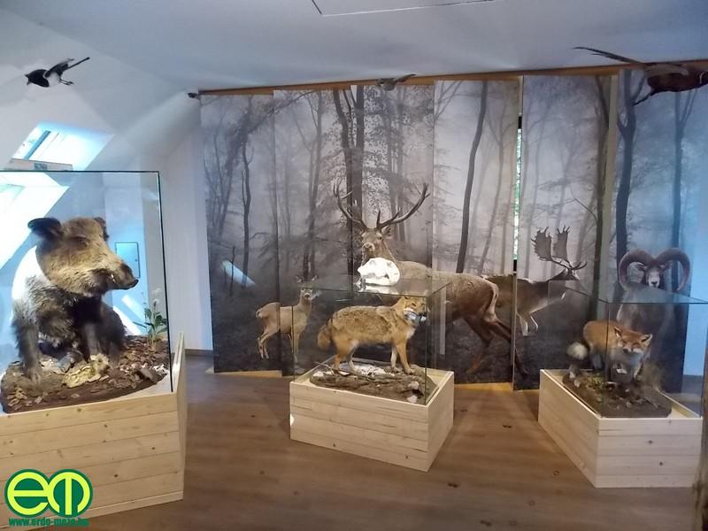 kohalmy_vadaszati_muzeum_34