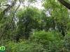 donau_auen_nemzeti_park_115