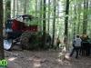 forest_romania_51