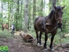 forest_romania_58