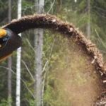 109993_biomassza_faapritek