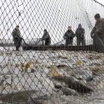 Halászat - Karácsonyi lehalászás Nyíregyházán