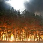 russiaforestfire12[1]
