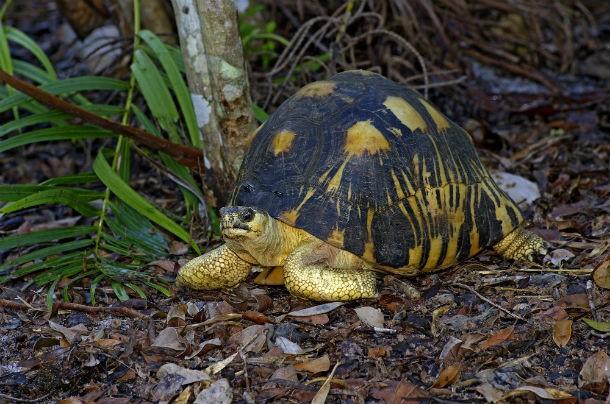teknős2