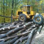 Veres Gábor - LKT erdészeti vonszoló