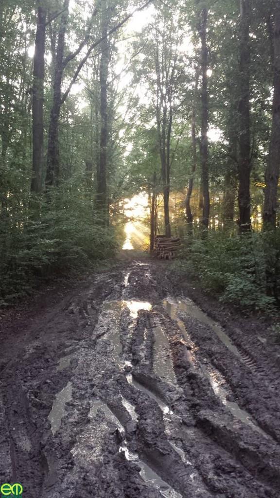 Koma Dávid képe - Reggel az erdőn