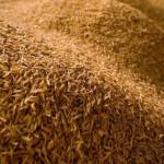 Rice_husk rizsháncs
