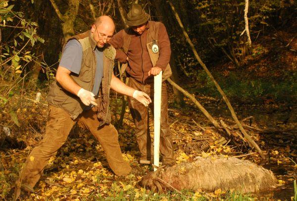 Bakó Csaba (balra) és Kalcsó István, a Karancsvölgyve Vadásztársaság hivatásos vadásza az egyik elpusztult juh tetemével