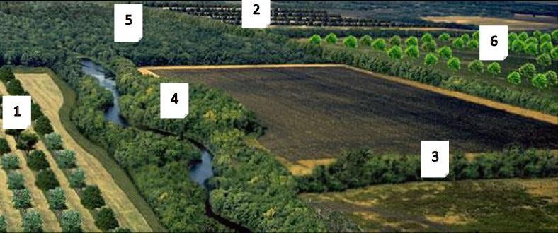 5. kép: Agroerdészeti tájkép (forrás: United States Department of Agriculture) Jelmagyarázat: 1. Köztestermesztés (fasorok közti mezőgazdasági növénytermesztés), 2. Köztes legeltetés (fasorok közti legeltetés), 3. Mezővédő erdősáv, 4. Part menti védősávok (fákkal), 5. Legeltetett erdő, 6. Fás legelő
