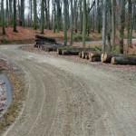 1. ábra: II. osztályú erdészeti feltáróút