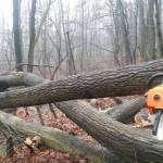 Mintegy 800 méter kerítés fekszik a földön a rádőlt fák alatt