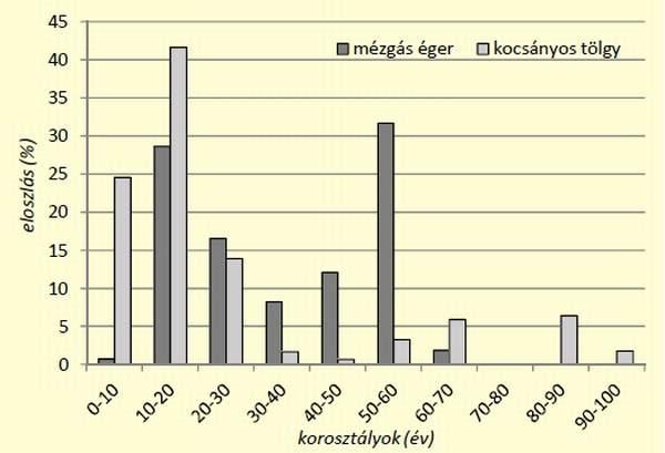 8. ábra: Beállóhelyek erdőállományainak korosztályi eloszlása mézgás éger és kocsányos tölgy esetében