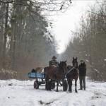 A Gemenci Erdő- és Vadgazdaság Zrt. munkatársai takarmányt szállítanak lovas kocsival a társaság Kölked közelében fekvő erdészetében 2015. január 2-án. MTI Fotó: Sóki Tamás
