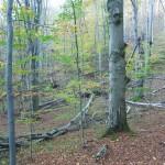 Őserdő Erdőrezervátum (Bükk)