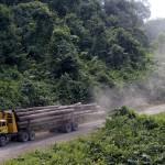 Fakitermelés Malajziában. (Fotó: AFP)