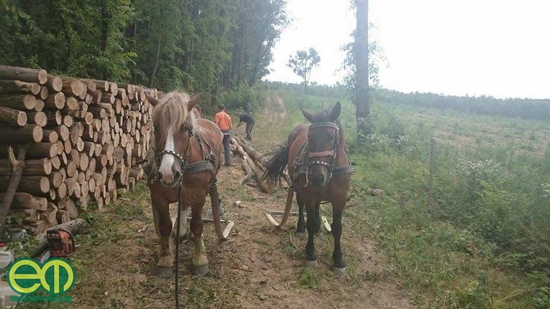 Blaskó Máté lovas fakitermelő fotója