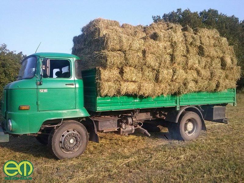 Hajagos Róbert a mezőn - Bálaszállítás IFA teherautóval