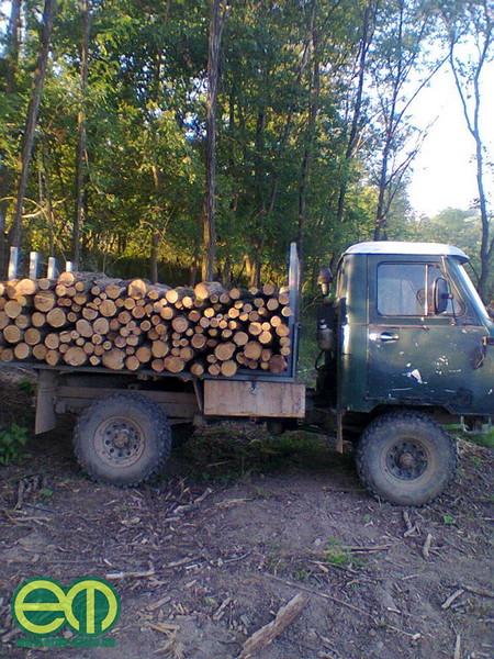 Katona Csaba így szállítja a fát