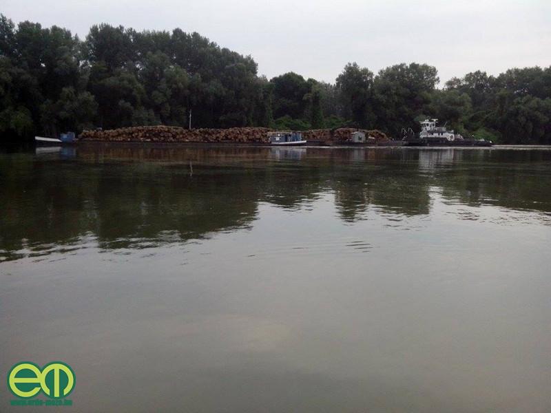 Vázyonyi Gábor fotója Magyarkanizsáról - Uszály érkezett 1600 köbméter fával