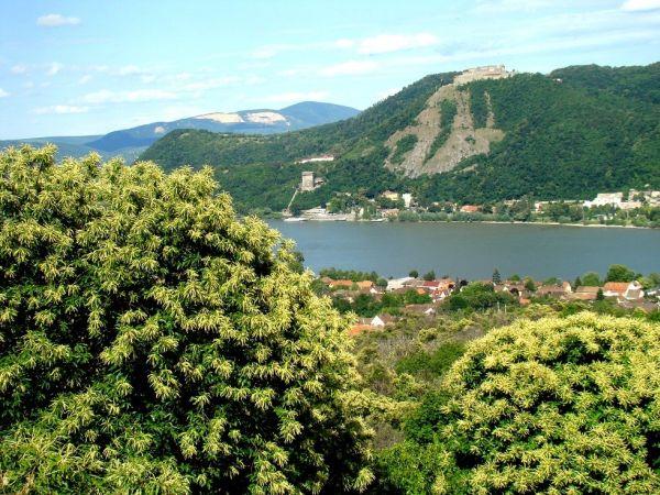 4. kép Tájkép Nagymaroson, a Fehér-hegyi gesztenyésből virágzás idején (Fotó: Zeller Zoltán)
