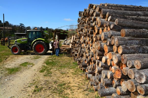 Az agroerdészeti rendszerek lényege, hogy saját felhasználásra akár kisebb dimenziójú faanyag megtermelésével (a képen karámfa) önellátásra rendezkedhetnek be vele a gazdák, amely jelentős költségcsökkentő lehetőség