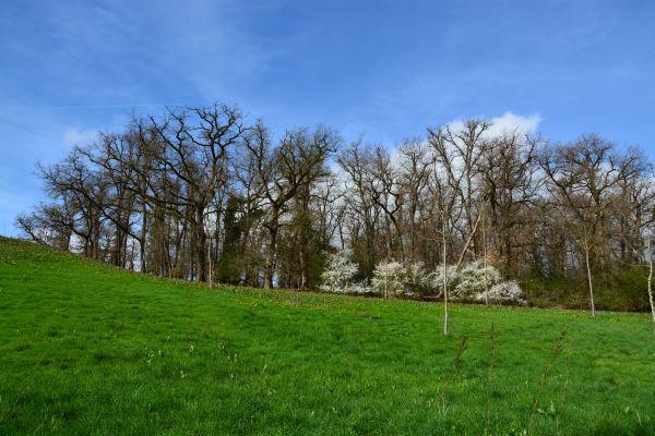 A mezőgazdasági területek közé ékelődött erdőfoltok (a képen látható 200 évnél idősebb molyhos tölgyes) a benne lévő faanyagnál lényegesebb nagyobb hasznot hajtanak legelőként, élőhelyként, mikroklíma alakítóként a tulajdonos számára