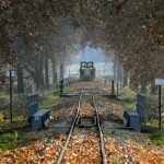 Fával megrakott tehervonat halad Csömödér határában.