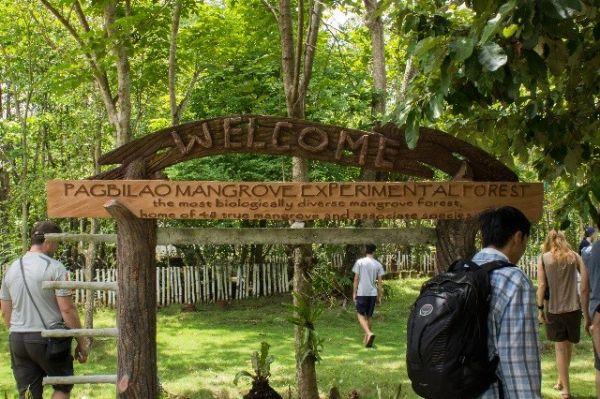 Pagbilao Kísérleti Mangrove Erdő