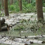 A korábbi árvizek egyike a KAEG Zrt. területén