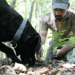 szarvasgomba_kutya