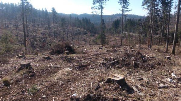 Jégkár utáni erdőkép