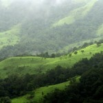 forest_india