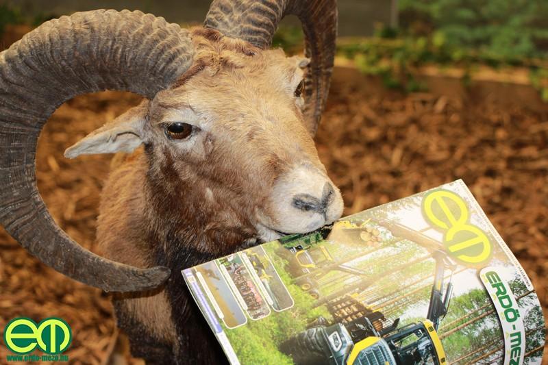 Különleges Erdő-Mez olvasó a muflonkos személyében :)