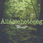 kiczko_allaslehetoseg
