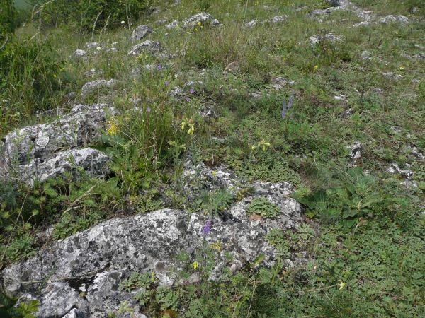Értékes mészkő sziklagyep tornai vértővel - Gömör-Tornai karszt Fotó: Sonkoly Judit