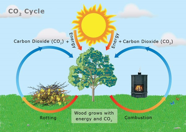 A rothadás egy lassú égés, így a faanyag elégetésével nem károsítjuk a környezetet, hiszen egyébként is lebomlana és visszakerülne a természetes körforgásba. www.ctsweep.com